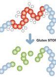 Gluten stop – infografik