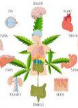 Endicannabinoid system